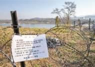 집중호우 뒤 아프리카돼지열병 비상…바이러스 전파 가능성