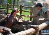 [CMG중국통신]중국 동물들의 <!HS>이색<!HE>적 <!HS>피서<!HE> 방법