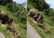 '로드킬' 당한 새끼 코끼리···어미는 그 곁 떠나지 못했다
