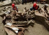 멕시코서 맘모스 200마리 뼈 무덤 발견···멸종 밝힌 단서 있다