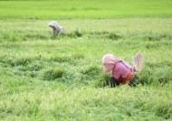 """연이은 태풍에 추석물가 비상…농림부 """"9월 중·하순까진 안정"""""""