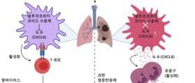 백혈구 '보디가드' 오류 탓이었다…코로나 중증 원인 발견