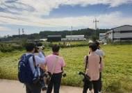 파주·연천 등 접경지역, 돼지 다시 키운다…ASF 발병 1년 만