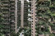 [서소문사진관] 수풀 우거진 중국 '정글 아파트', 입주민이 극소수인 까닭은...