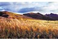 [미래 혁신도시 울산] 금빛 억새 물결의 영남알프스 … 올 가을 '힐링여행'은 울주로 !