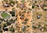 아프리카 코끼리 350마리 떼죽음…놀랍게도 범인은 녹조
