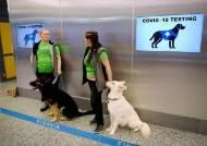 마약 찾는 '개 코' 코로나도 찾을까…핀란드 공항 '코로나 탐지견' 실험