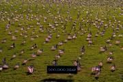 [서소문사진관] 미, 코로나 희생자 20만 넘어...워싱턴 기념탑 앞 2만 개의 성조기