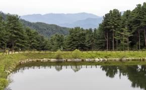BTS 자작나무숲·감악산 출렁다리···'언택트 여행' 여기 가자