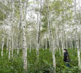 한가위엔 한적하게, 가을숲에 물들어볼까