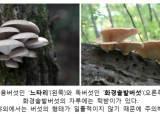 가을산 지나치기 힘든 유혹…'이것' 먹는 순간 목숨 위험하다