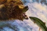 [더오래]곰처럼 겨울잠 잔 러시아 프스코프 지방 사람들
