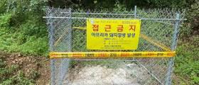 강원 화천 농장서 아프리카<!HS>돼지열병<!HE> 확진…1년 만에 재발