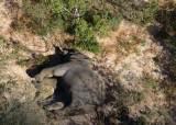 줄잇는 의문의 '코끼리 떼죽음'···그옆에 있는 '물웅덩이' 정체