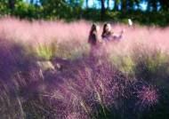 핑크뮬리 찰칵, 전기자전거 씽씽… 가을 제주에선 이렇게 논다