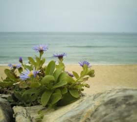 [권혁재 핸드폰사진관]바다·가을·기다림과 가장 잘 어울리는 꽃 해국