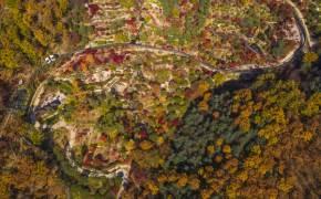 겨울 되면 못가는 가을 천국···단풍과 함께 열린 '비밀의 숲'