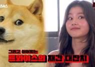 """'문명특급' 트와이스 사나, '시바견 짤' 따라하자 웃음 """"똑같아"""""""