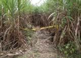 식당 환풍구로 두번째 탈옥…사탕수수밭 살인사건 주범 최후