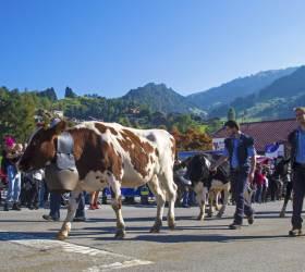 [<!HS>한<!HE> <!HS>컷<!HE> <!HS>세계여행<!HE>] 알프스의 가을이 시작되는 날, 소 떼가 돌아오는 날
