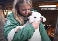 한국 개농장에서 구출된 개 200마리, 美메릴랜드에서 '새 삶'