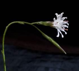 [권혁재 핸드폰사진관] 우리 땅에서 가장 늦게 피는 꽃 좀딱취