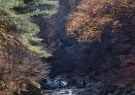 경기도·경기관광공사가 픽한 홍류(紅流) 흐르는 늦가을 단풍 계곡