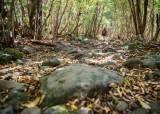 현무암 낙엽길에 내린 단풍, 한라산에서 가을과 작별하다