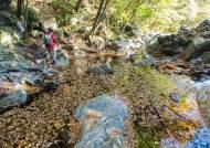 현무암 낙엽길에 내린 단풍…한라산에서 가을과 작별하다