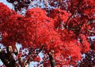 [더오래]가을이 붉은 것은 누군가의 열꽃 때문일까