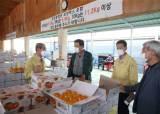 농산물 유통행정이 농가 도왔다, 청도반시 최고가격 달성