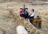 """[소년중앙] """"돼지에게 희망을"""" 축산공장 탈출한 새벽이가 전하는 돼지 같은 삶 이야기"""