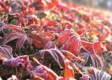 [한 컷] 가을 위로 겨울이 내렸습니다