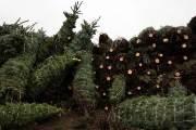 세계 최대 크리스마스트리 생산지, 美 노블 마운틴...코로나로 매출 하락 걱정