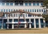 구글 따라한 공룡 치우고, 5억 들여 비행기 들이는 경북도청