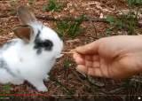[더오래]공원 토끼와 놀던 은퇴자, 어떻게 유튜버로 떴나?