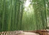 """""""도심에 배달되는 깨끗한 산 공기""""…200억짜리 울산 바람길숲의 비밀"""