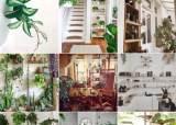 [더오래]5만원에 끝내는 '플랜테리어'…슬기로운 집콕생활
