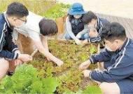 [issue&] 청소년에게 농업의 중요성 가르치는 '학교텃밭 활동 프로그램' 성료
