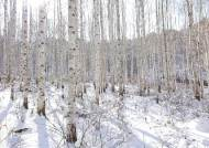 [포토클립] 한강의 기적처럼 한반도 숲이 살아났다