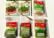[더오래]겨울철 실내서 새싹 채소 키워 먹기…짭짤한 植생활