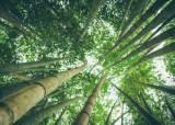[더오래]대나무처럼 지조·절개 상징하는 동양권 최고 보석