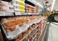 '금계란' 우려에 정부 수입달걀 관세 인하 검토, 양계협회 반발