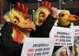 닭·오리 2000만 마리 살처분…금계란 이어 치킨값 조마조마
