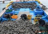 갈퀴로 밑바닥까지 긁었다…어린 조개·물고기 알까지 싹쓸이
