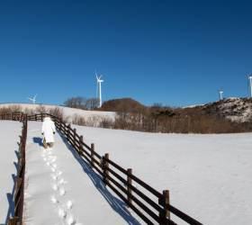 대관령자락 하얀 눈밭, 살포시 밟아볼까