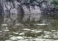 '물고문'에 신음하는 고래그림…세계유산 등재 첫관문 통과