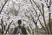 [한 컷] 꽃보다 먼저 핀 태극기 꽃