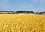 """쌀값 30% 폭등에 """"경기미 지켜라"""" 신고포상금도 500만원으로"""