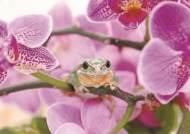 [한 컷] 색과 향에 취한 청개구리